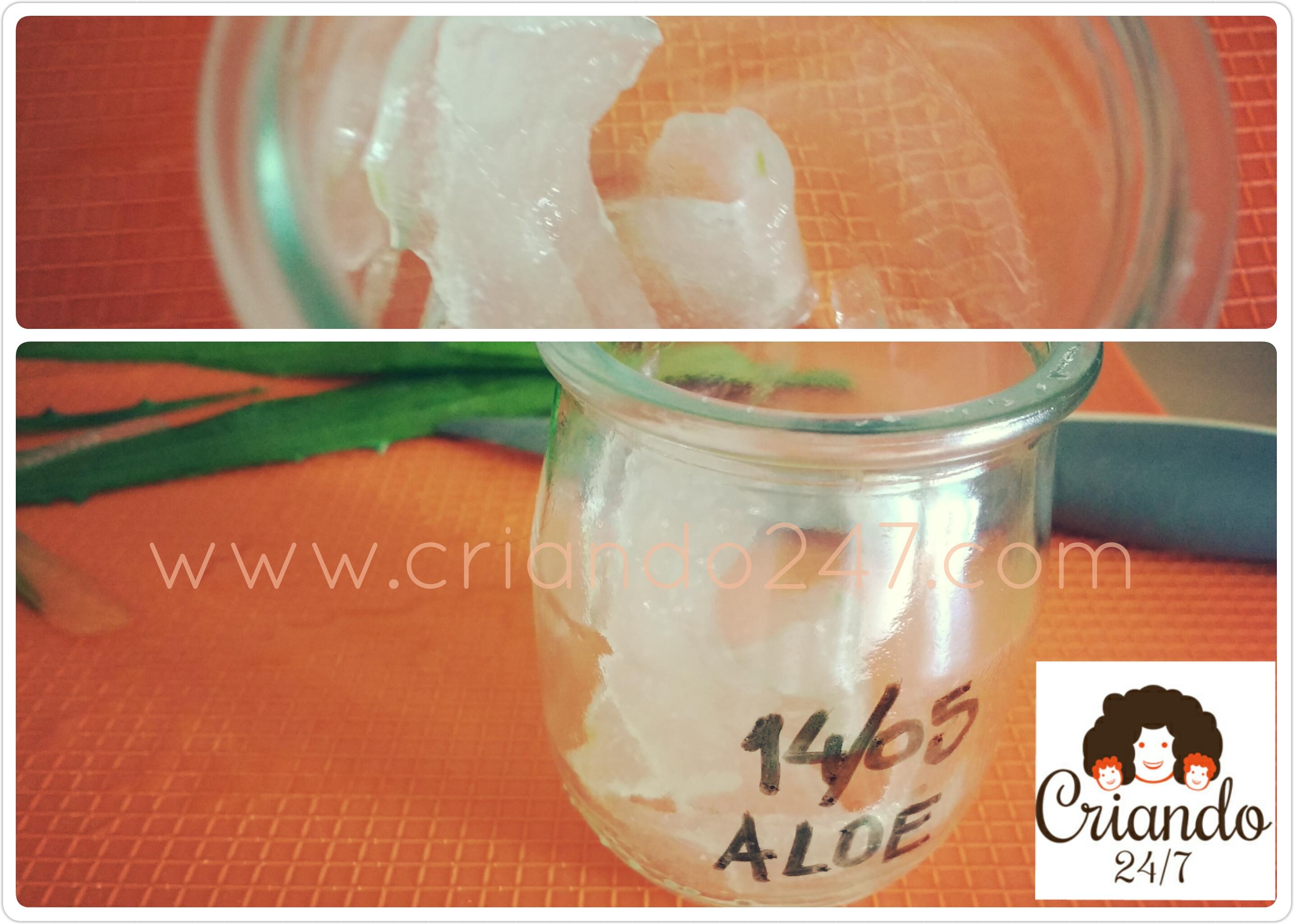 Criando247 Aloe Vera5
