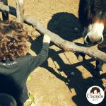 Burrolandia: un refugio de animales para visitar en familia
