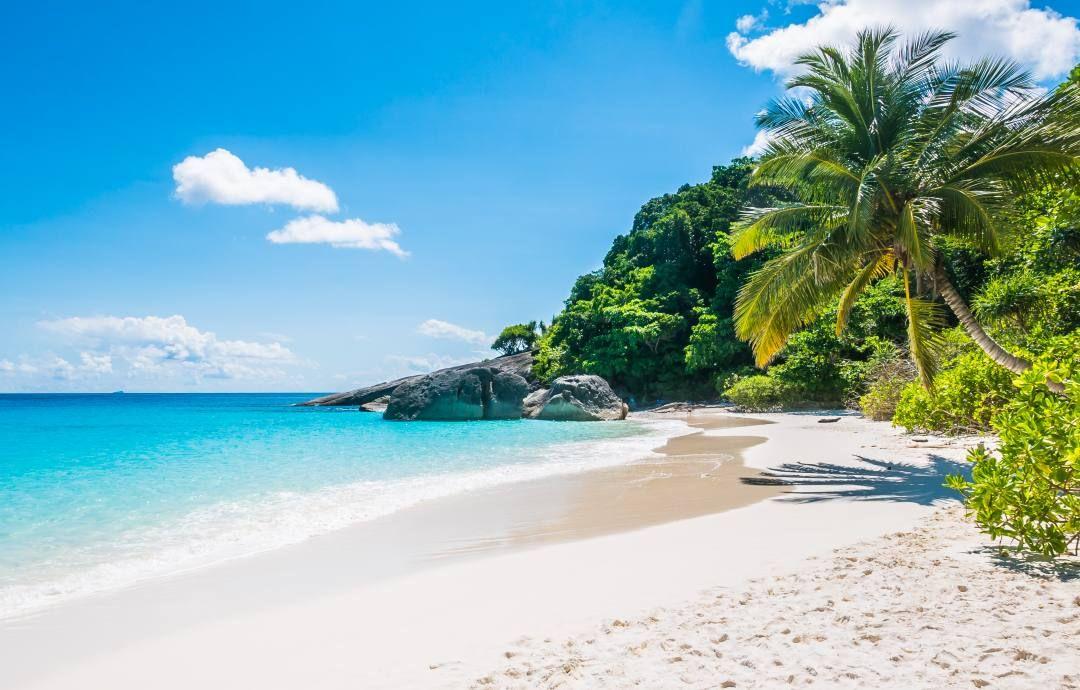 foto de una playa de arenas blancas, mar turquesa y plameras